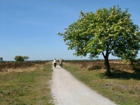 Fochteloerveen omgeving Minicamping UtSicht Bakkeveen